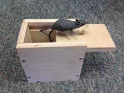 Mouse Scare Box Plans