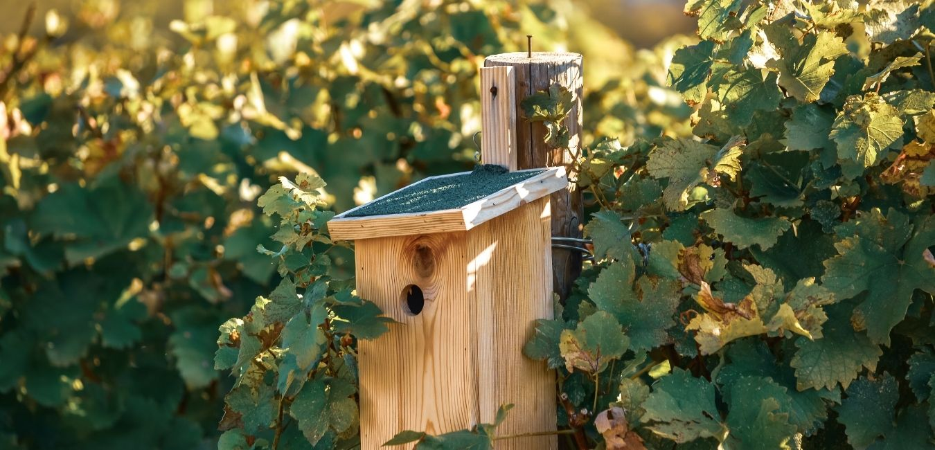 can you make a birdhouse out of pressure treated wood