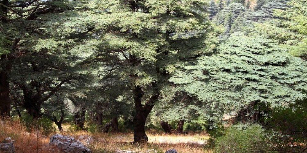 is cedar a good wood for furniture