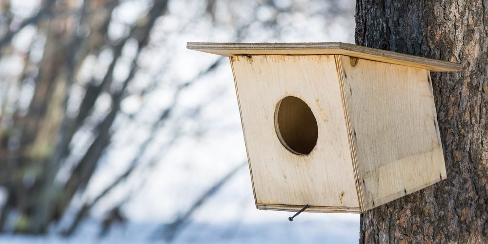 is plywood safe for birds