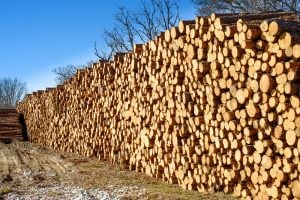 pine-logs-waiting-to-be-milled